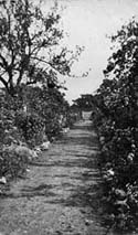 Bungay Cottage Garden Path